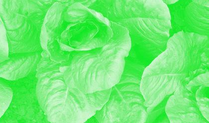 _MG_9281 sh Grøn 1 420