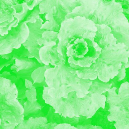 _mg_9245-copy-sh-groen-1-420