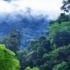 verdens-skove-420